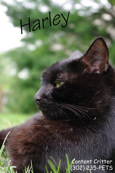 Content-Critter-Cat-Sitting.jpg