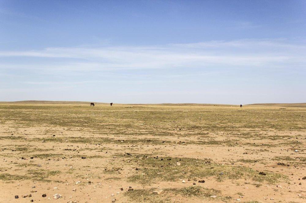 Overgrazed land in Inner Mongolia. Source.