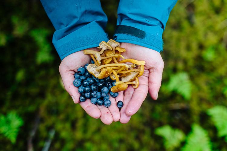 Alaska foraging