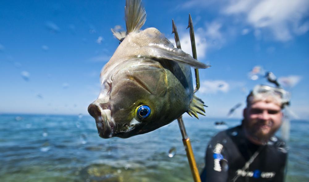 Spearfishing-6587.jpg