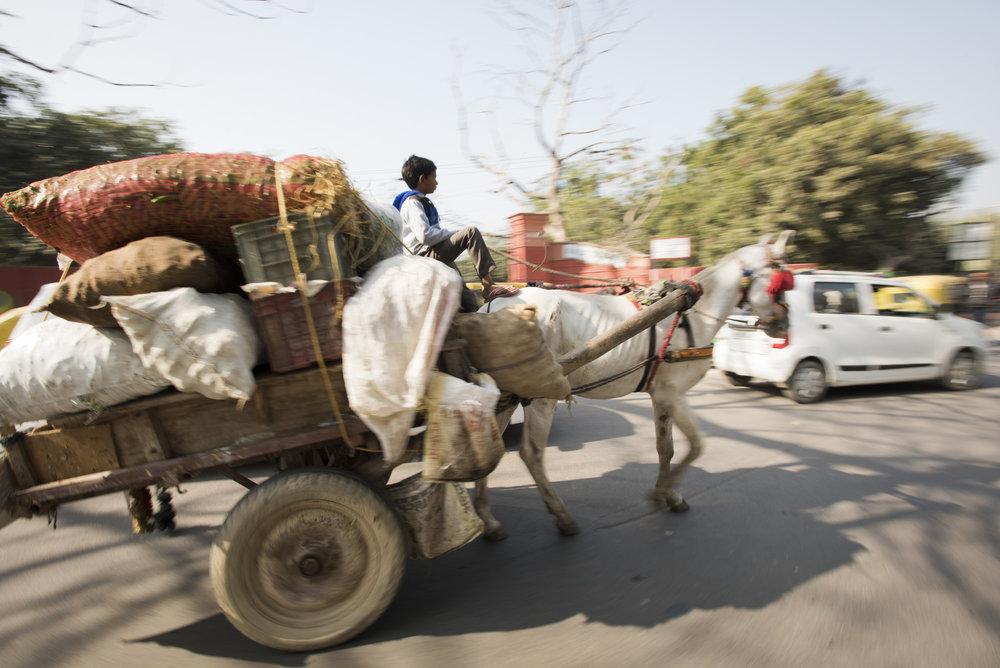 Agra-6842.jpg