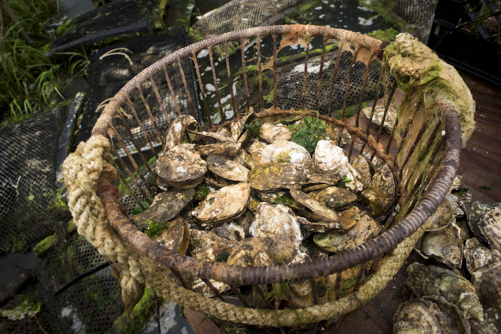 Oysters-5392.jpg