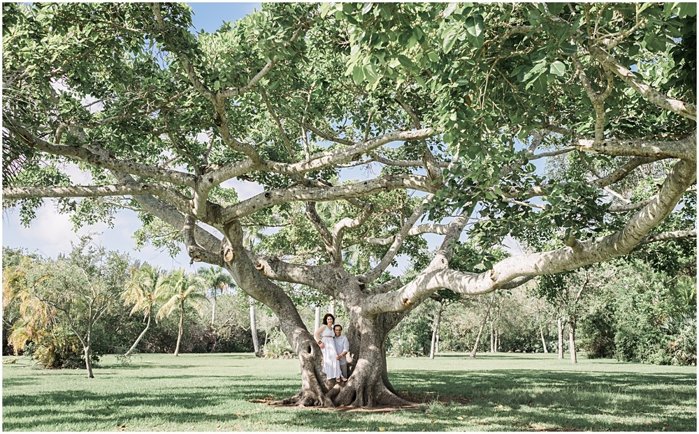 Engaged couple session in an oak tree in coral gables
