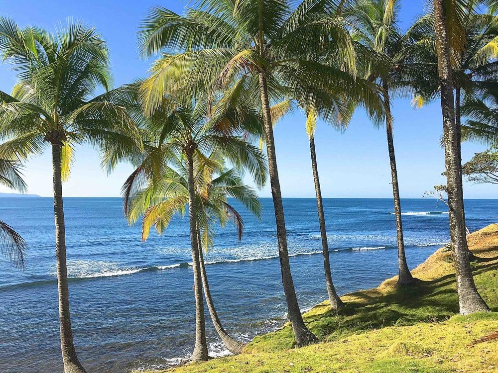 Palm Trees_small.jpg