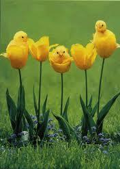 Easter_Flower.jpg