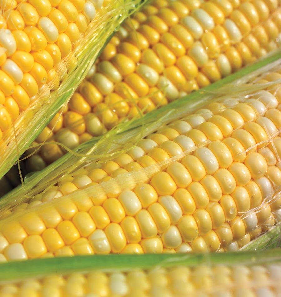 Luscious Corn