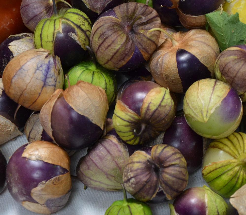 Purple de Milpa Tomatillos