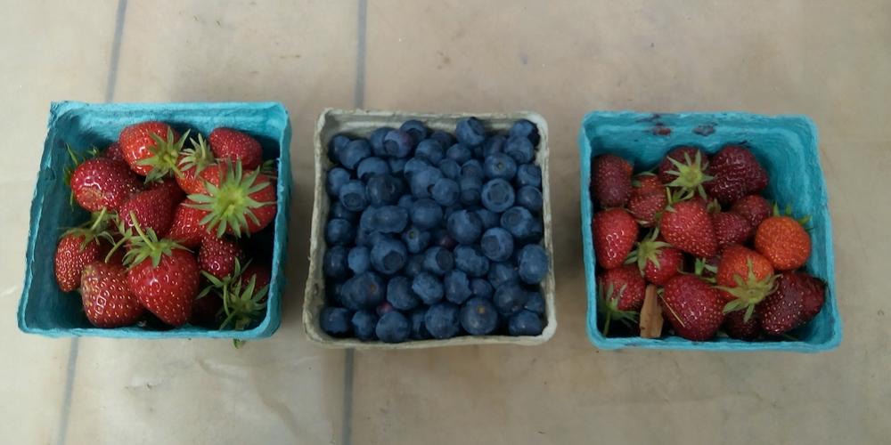 berrypints