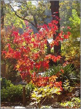 Arbutus Garden Arts