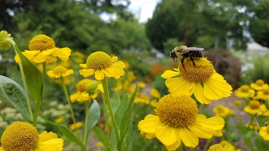 Photo courtesy of the Oregon Bee Project