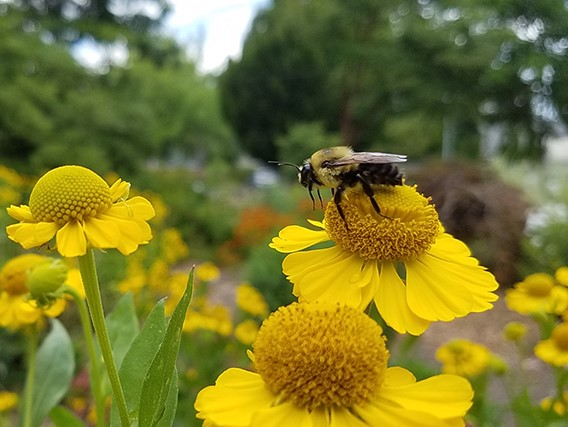 Courtesy of hte Oregon Bee Project