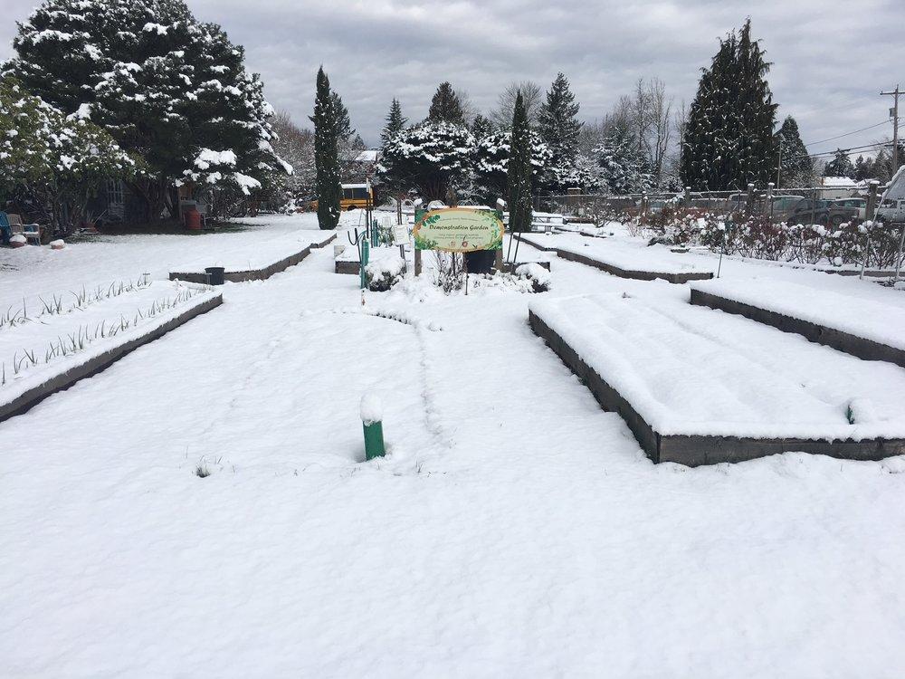 Snowy garden 1.JPG