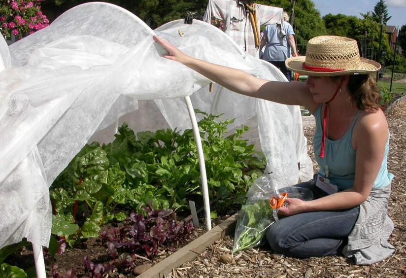 row cover gardener.jpg