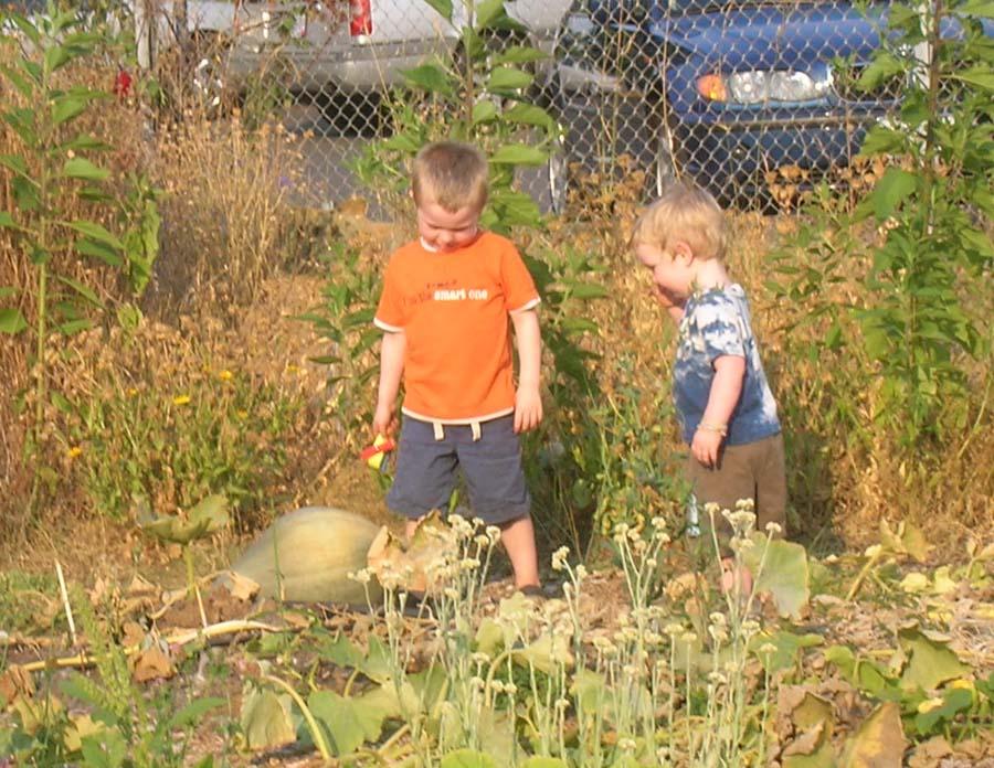 Harvest 2011 .Westons kids.jpg