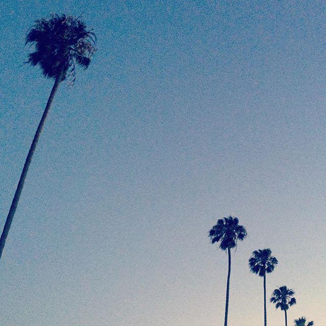 S U M M E R ❤️ #summerlove #calove #home #palmtrees #magichour #nevergetsold #venice #venicebeach #la #ca