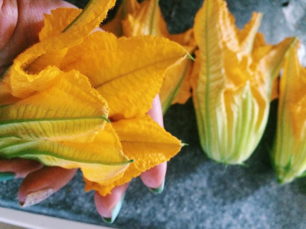 Zucchini Blossoms.JPG