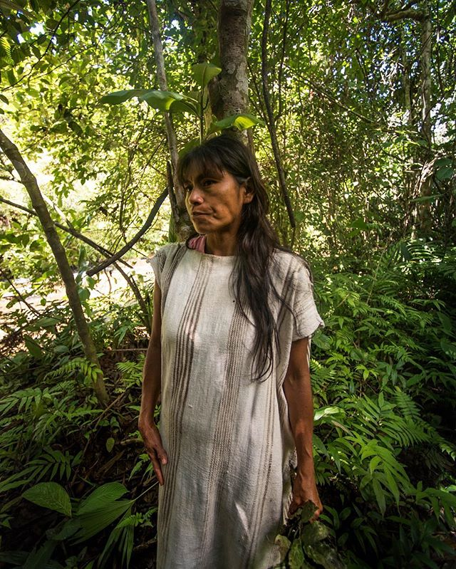 Herlinda, a Matsigenka woman from the native community of Santa Rosa de Huacaria illustrates the leaves from the tree potsotaroki, a large rainforest tree of the mango family. With these crushed leaves she created the redding tint for her Matsigenka hand woven, hand-spun cotton tunic, called cushma. As seen here, Herlinda wears her tunic over a western shirt. Traditionally, these cushmas are created by the women during their time of seclusion as part of their transition through puberty. It can take close to three miles of hand-spun to make a single cushma. The design is passed on through many generations, and is mainly used as a formal attire or as a sleeping garment.  Today, the Matsigenka in Manu are more commonly seen dressed in their western, modern attire than in their traditional tunic, except when they perform ceremonies for visiting tourists. 📷: @lina_collado