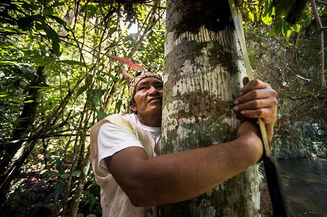 One of the few remaining Matsigenka Curanderos, Alberto Manquariapa embraces a tree that he used to save the life of his brother. As youth are increasingly persuaded that Western knowledge and medicine are superior to traditional, Alberto fears for the soul of Matsigenka culture. He worries their ancestral knowledge of the jungle will be lost in the future generation. The Matsigenka have knowledge of over three hundred species of medicinal plants that are effective for treating a wide variety of health problems and a spiritual connection with nature westerners are still trying to understand. 📷: @lina_collado