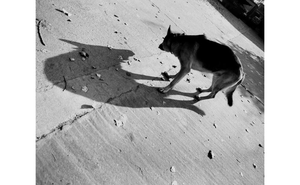 hund_.jpg