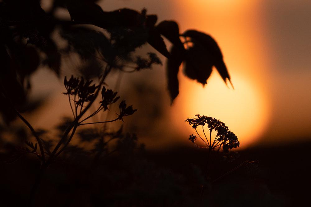 Sunset at Albrunna