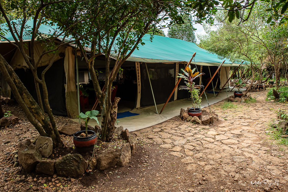 We stayed at the Mara Eden Safari Camp. A simple but nice camp with great staff. The camp is situated perfectly. Just at the Mara River, which makes travel time very short where the action is.
