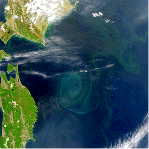 Plankton blooms off the coast