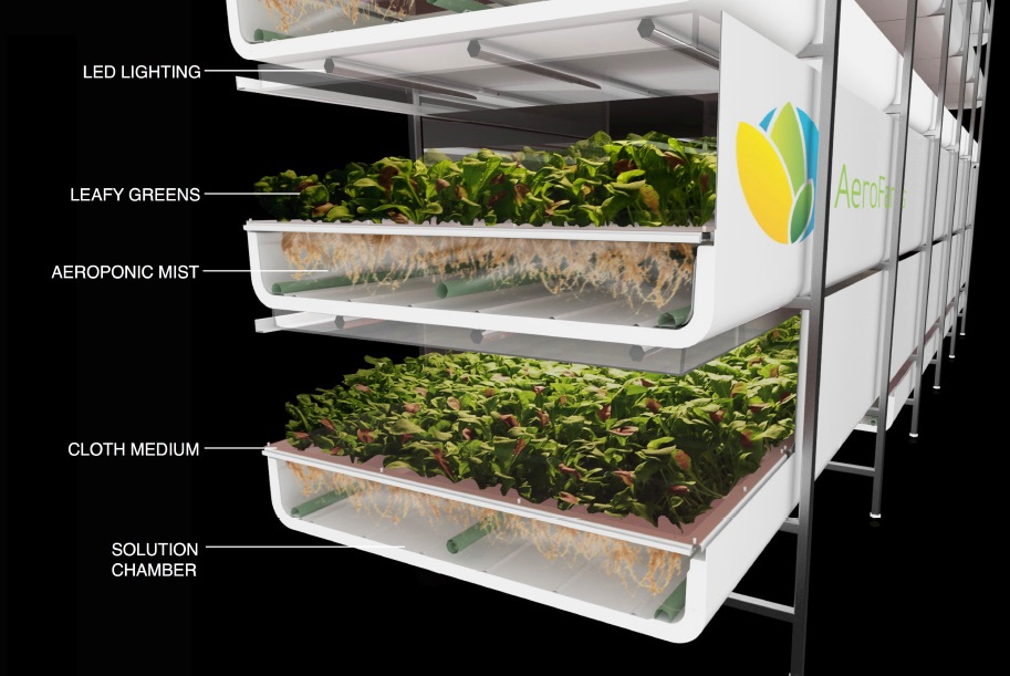 The trays in an Aerofarm indoor growing farm