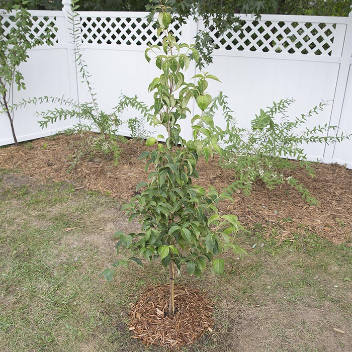 how-to-plant-a-tree-or-shrub-inline-post.jpg