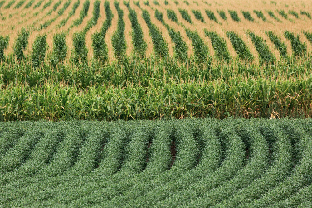 Corn/Soy rotations; only 1-13% of the caloric value of these crops will be consumed by humans, at the cost of our climate stability and the former ecosystems that occupied this land. This isn't factoring that 40% of the corn is used for ethanol production, which speaks to role renewable energy plays in efficient land use.