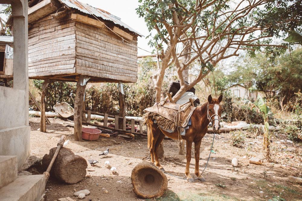 KDP_haiti17_website-100.jpg