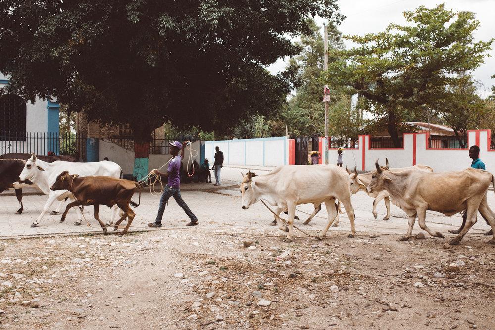 KDP_haiti17_website-106.jpg