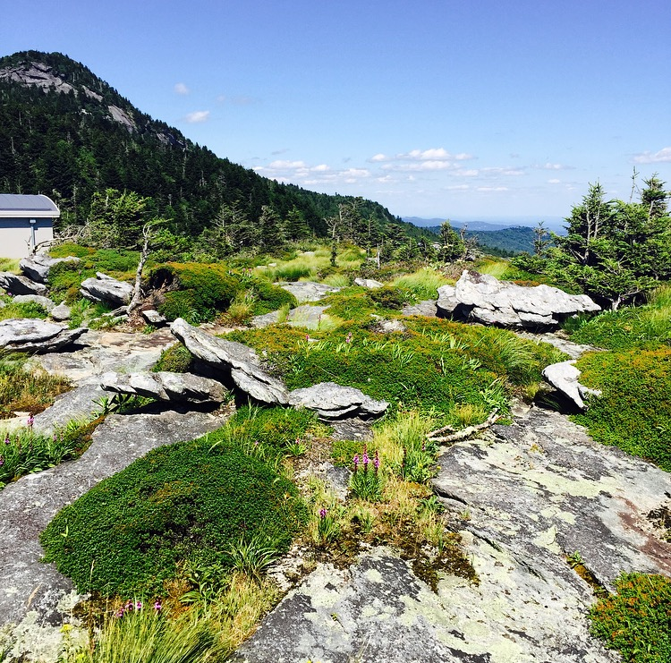 Grandfather Mountain 1