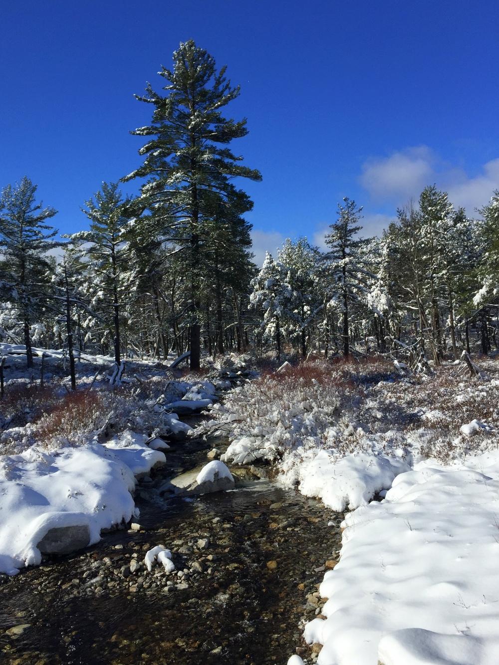Winter woodlands. Minnewaska State Park.