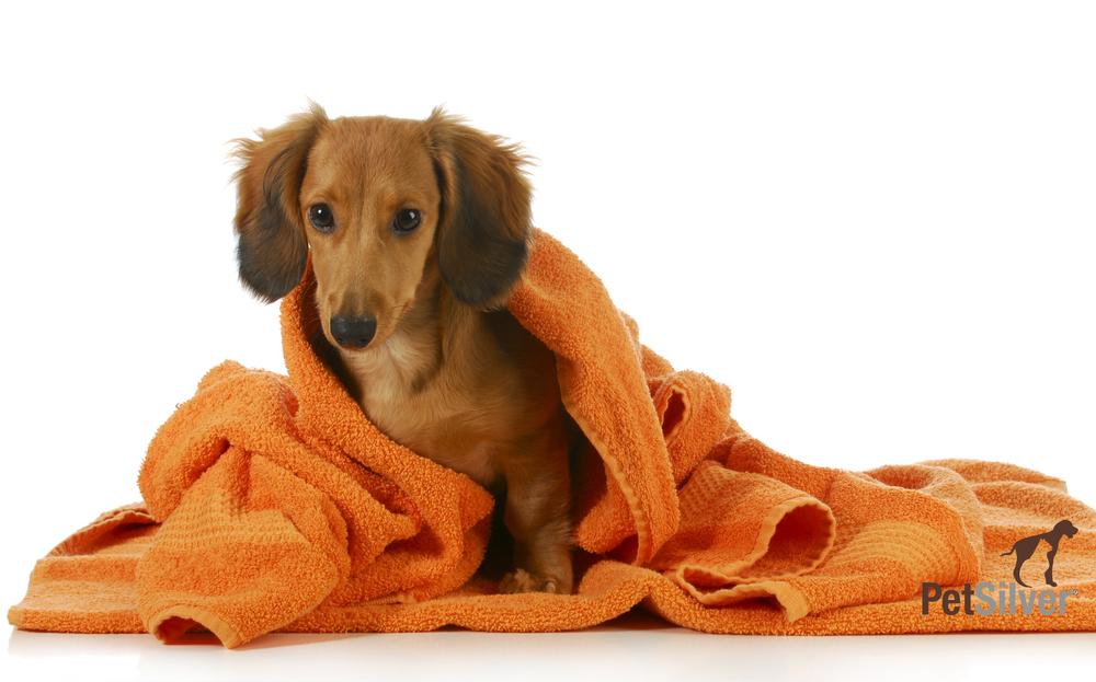 dog-bath-l copy.jpg