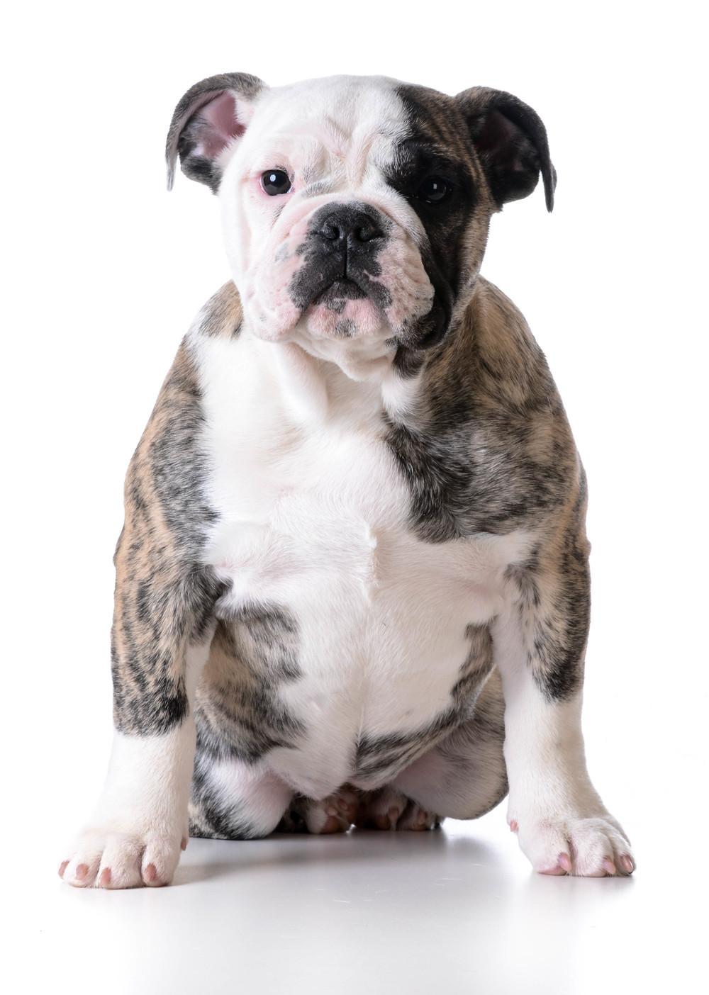 photodune-11261308-cute-puppy-l.jpg