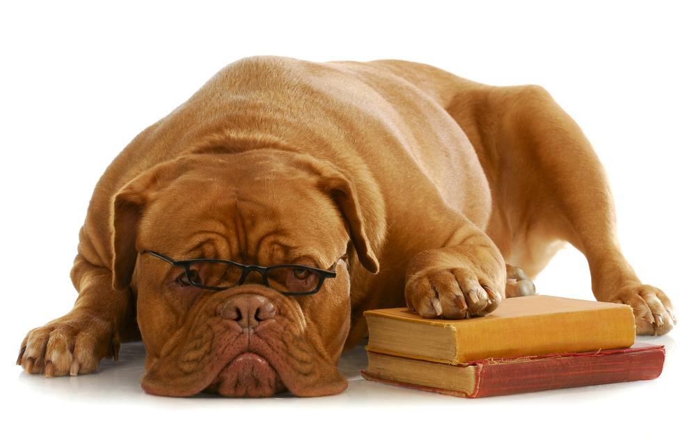 photodune-10028107-dog-obedience-training-l.jpg