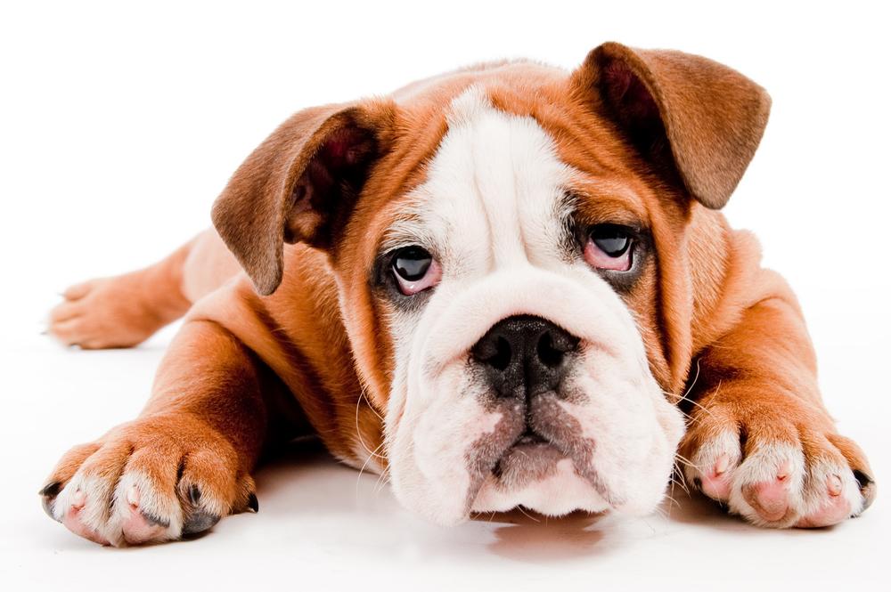 photodune-485407-cute-dog-m.jpg