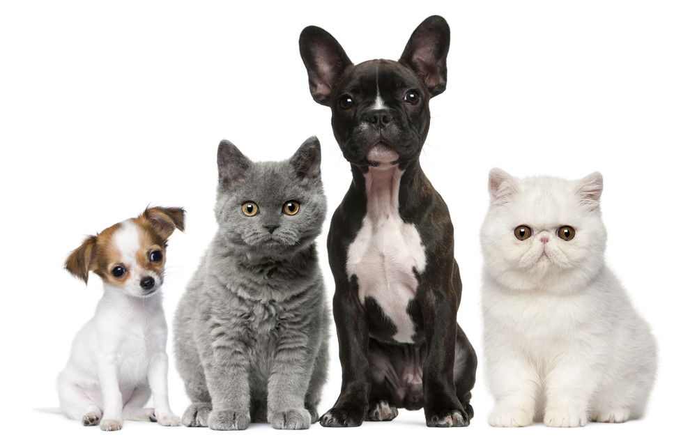 photodune-288499-group-of-dogs-and-cats-in-front-of-white-background-l.jpg