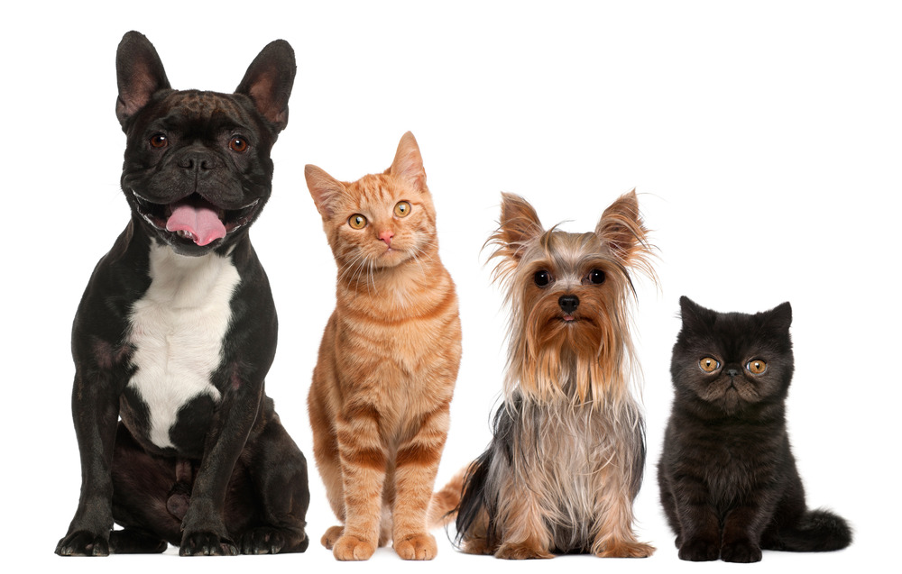 photodune-4702449-group-of-cats-and-dogs-sitting-in-front-of-white-background-l.jpg