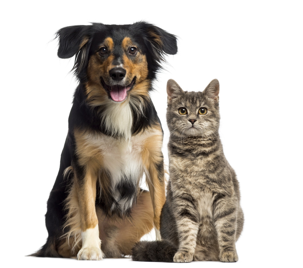 cat-and-dog-sitting-together-l.jpg