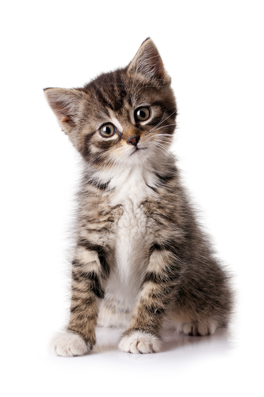 little-kitten-l.jpg
