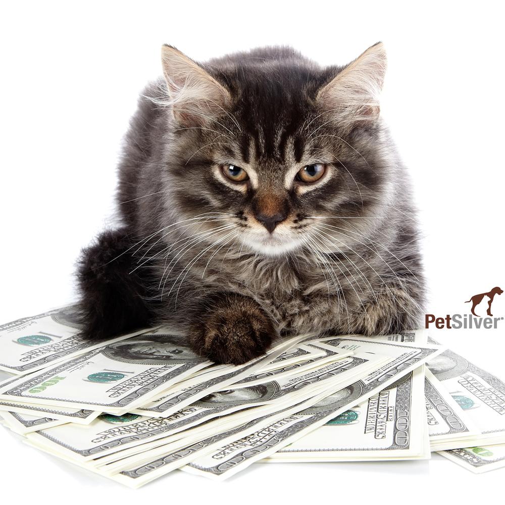 cash kitty.jpg