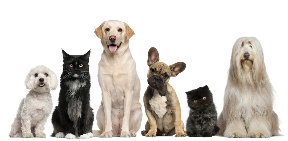 photodune-7261884-group-of-dogs-and-cats-sitting-in-front-of-white-background-l.jpg