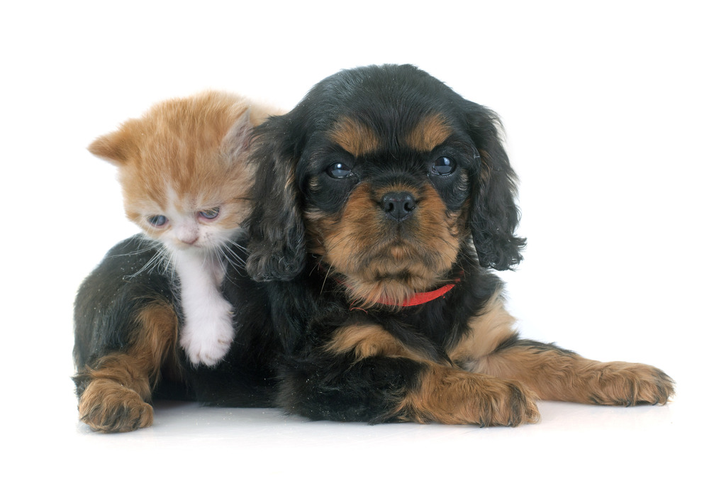 photodune-10760411-persian-kitten-and-puppy-l.JPG