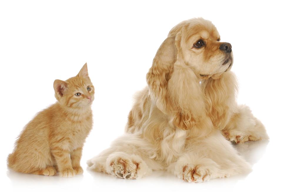 photodune-10028051-dog-and-cat-l.jpg