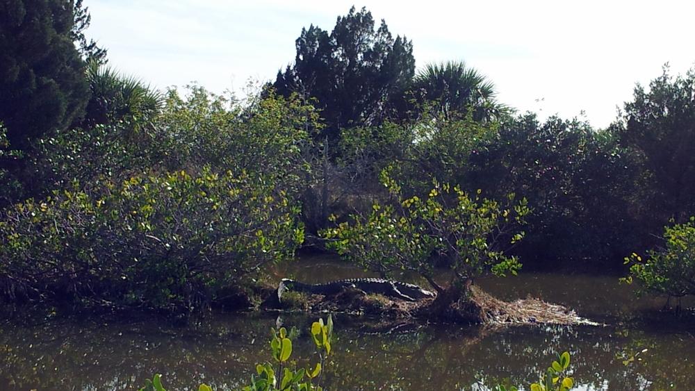Near Titusville, FL