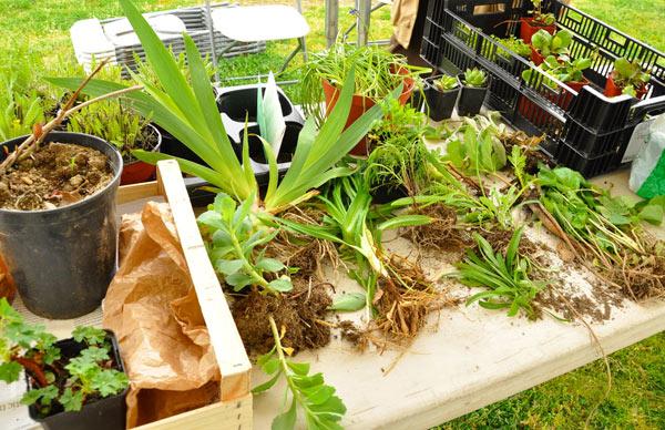 guerande---troc-plantes--1800.jpg