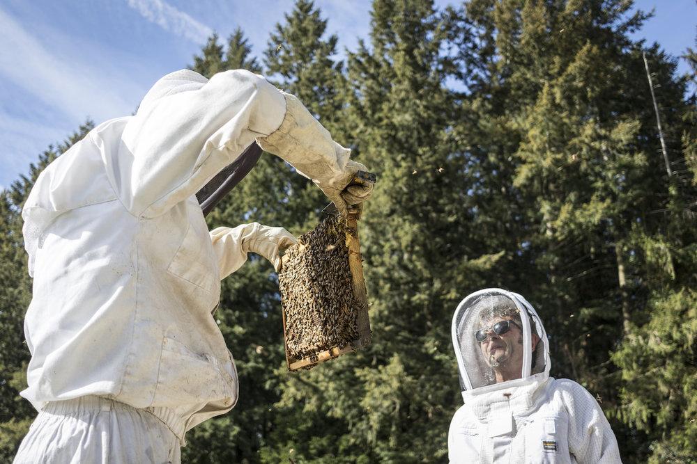 Le rucher Creusois-69.jpg