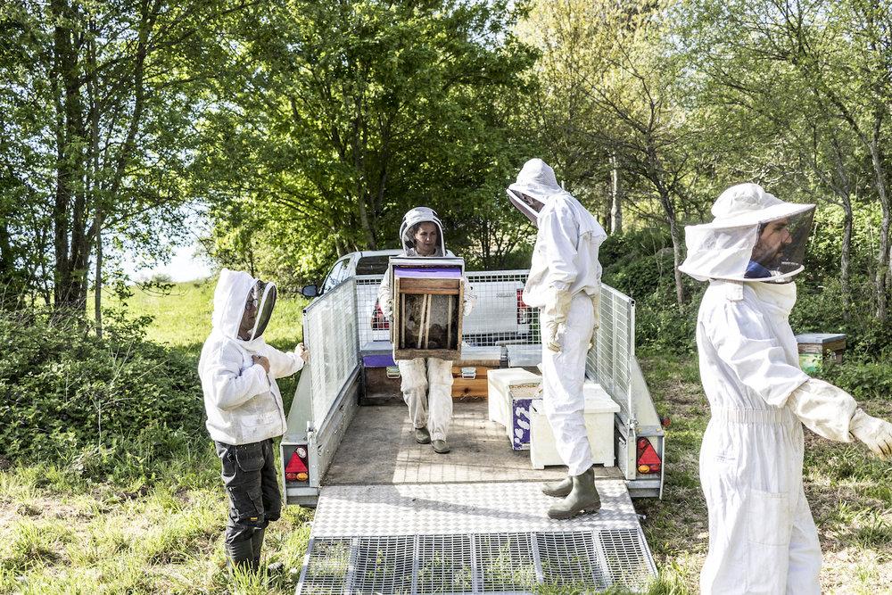 Le rucher Creusois-88.jpg