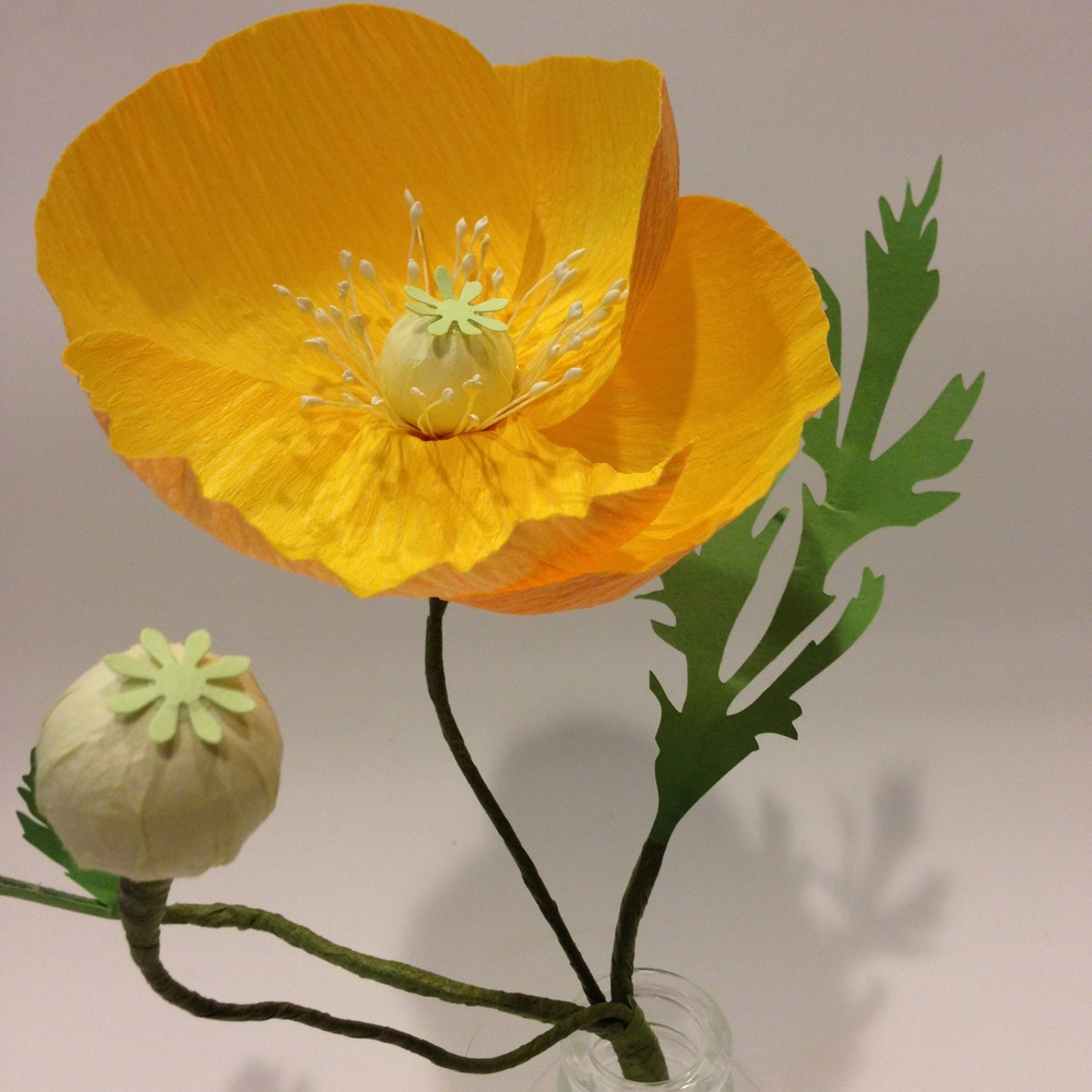 Golden Paper Poppy *detail